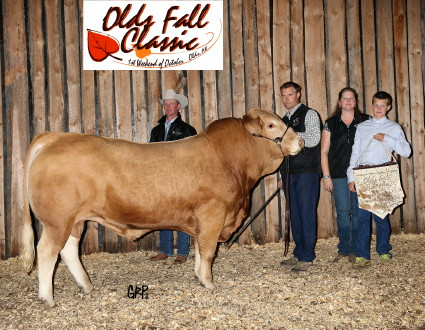 Grand Champion Bull, WSS Celebration, Willow Springs Stock Farm